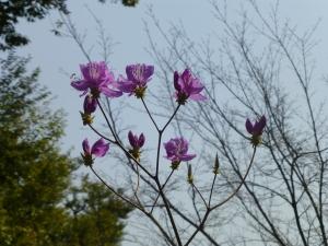 At Tenryu-ji temple garden